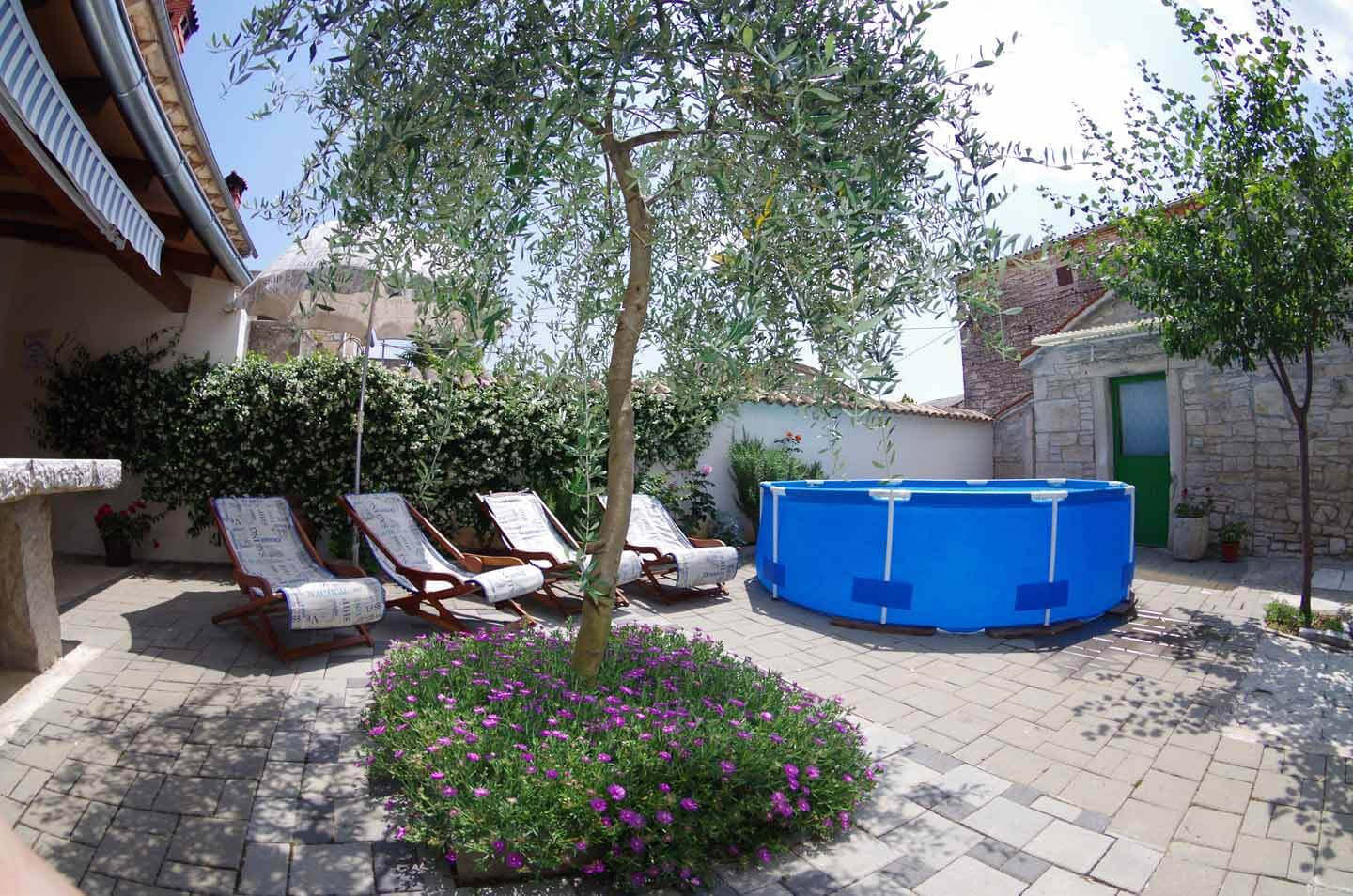 Olive tree and pool